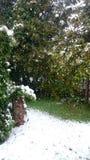 Jardín nevado en abril imagen de archivo