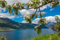 Jardín noruego de la fruta Foto de archivo libre de regalías