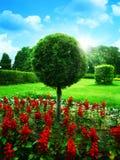 Jardín optimista foto de archivo
