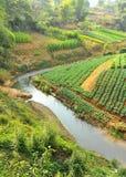Jardín orgánico en Laos Imagenes de archivo