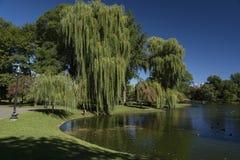Jardín público de Boston Imágenes de archivo libres de regalías
