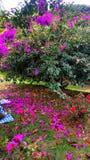 Jardín por completo de colores Fotografía de archivo
