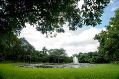 Jardín por la mañana Foto de archivo libre de regalías