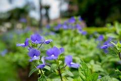 Jardín por la mañana Imagen de archivo libre de regalías