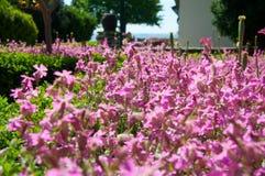 Jardín real cerca de la playa Imagen de archivo