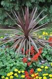 Jardín romántico de la floración Fotografía de archivo libre de regalías
