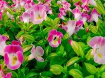 Jardín rosado Imagen de archivo libre de regalías