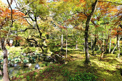 Jardín salvaje del otoño Fotos de archivo libres de regalías