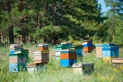 Jardín siberiano de la abeja Foto de archivo