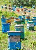Jardín siberiano de la abeja Imagenes de archivo