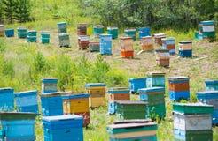 Jardín siberiano de la abeja Fotografía de archivo