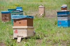Jardín siberiano de la abeja Fotos de archivo libres de regalías