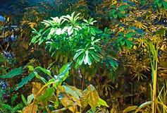 Jardín sub-tropicals Fotos de archivo