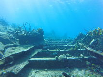 Jardín subacuático Foto de archivo libre de regalías
