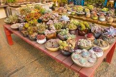 Jardín suculento Imagen de archivo libre de regalías
