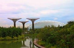 Jardín Tree2 Fotografía de archivo libre de regalías