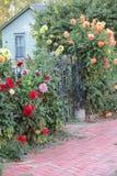 Jardín trepador en la esquina Foto de archivo libre de regalías