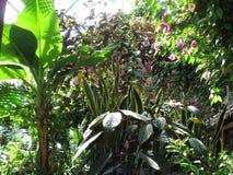 Jardín tropical foto de archivo
