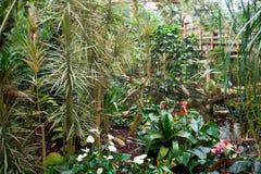 Jardín tropical Imagenes de archivo