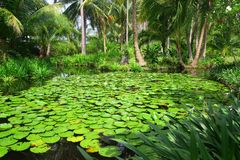Jardín tropical asiático con el pequeño lago y Lily Pads Fotografía de archivo