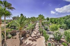 Jardín tropical cerca del chalet Imagen de archivo libre de regalías