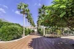 Jardín tropical cerca del chalet Foto de archivo