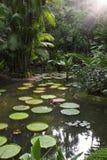 Jardín tropical con el gigante waterlily Foto de archivo libre de regalías