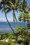 Jardín tropical con la opinión de océano Foto de archivo libre de regalías