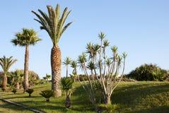 Jardín tropical de la palma Fotos de archivo libres de regalías