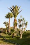 Jardín tropical de la palma Imagen de archivo