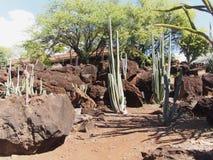 Jardín tropical del cactus Fotos de archivo