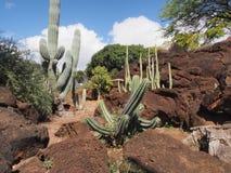 Jardín tropical del cactus Imagen de archivo