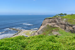 Jardín tropical del estilo por la costa del océano en un día soleado con triunfo imágenes de archivo libres de regalías