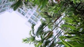 Jardín tropical del fondo, puente marrón y una fuente bajo la forma de lagarto Efecto del vórtice almacen de metraje de vídeo
