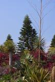 Jardín tropical del hotel fotografía de archivo