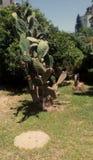 Jardín tropical en ciudad fotos de archivo
