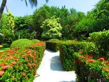 Jardín tropical en Maldivas Fotos de archivo