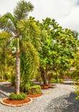 Jardín tropical hermoso Imagen de archivo