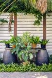 Jardín tropical hermoso con la cerca de madera blanca Fotos de archivo