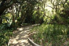 Jardín tropical hermoso en un ajuste pacífico imagen de archivo