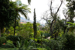Jardín tropical Madeira Foto de archivo libre de regalías