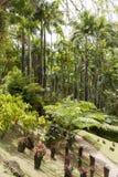 Jardín tropical Martinica Fotos de archivo libres de regalías