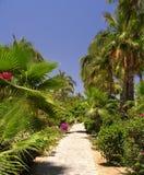 Jardín tropical No.2 Foto de archivo libre de regalías