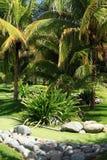 Jardín tropical verde con la palmadita Imagen de archivo libre de regalías
