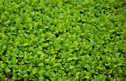 Jardín vegetal Imagen de archivo libre de regalías