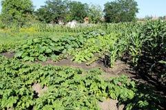Jardín vegetal Foto de archivo libre de regalías