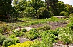 Jardín vegetal Imágenes de archivo libres de regalías