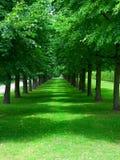 Jardín verde Imagenes de archivo