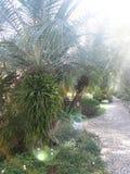 Jardín verde foto de archivo