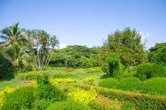 Jardín verde Imagen de archivo libre de regalías